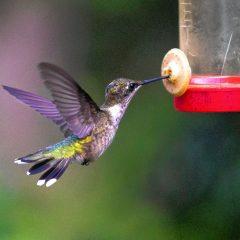 The Yogi: Yoga and the Great Hummingbird Migration