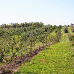 Apple Hill Farm – apples, peaches, pumpkin, pie and more