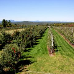 Carter Hill Orchard: Appley fun for the whole family