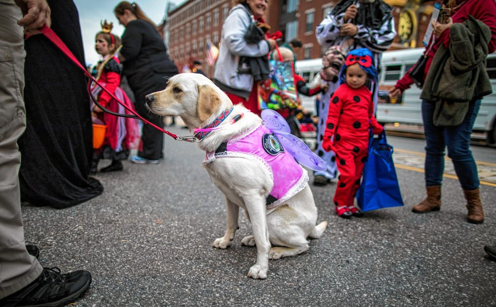 Even the Concord police dog Liberty got dressed up for Halloween Howl on Main Street in Concord on Friday evening, October 25, 2019. GEOFF FORESTER
