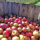 Looking back: Cider topper makes his rounds