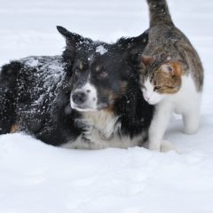 Keep your pets healthy during holidays