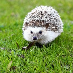 Exotic animals may be good option for some