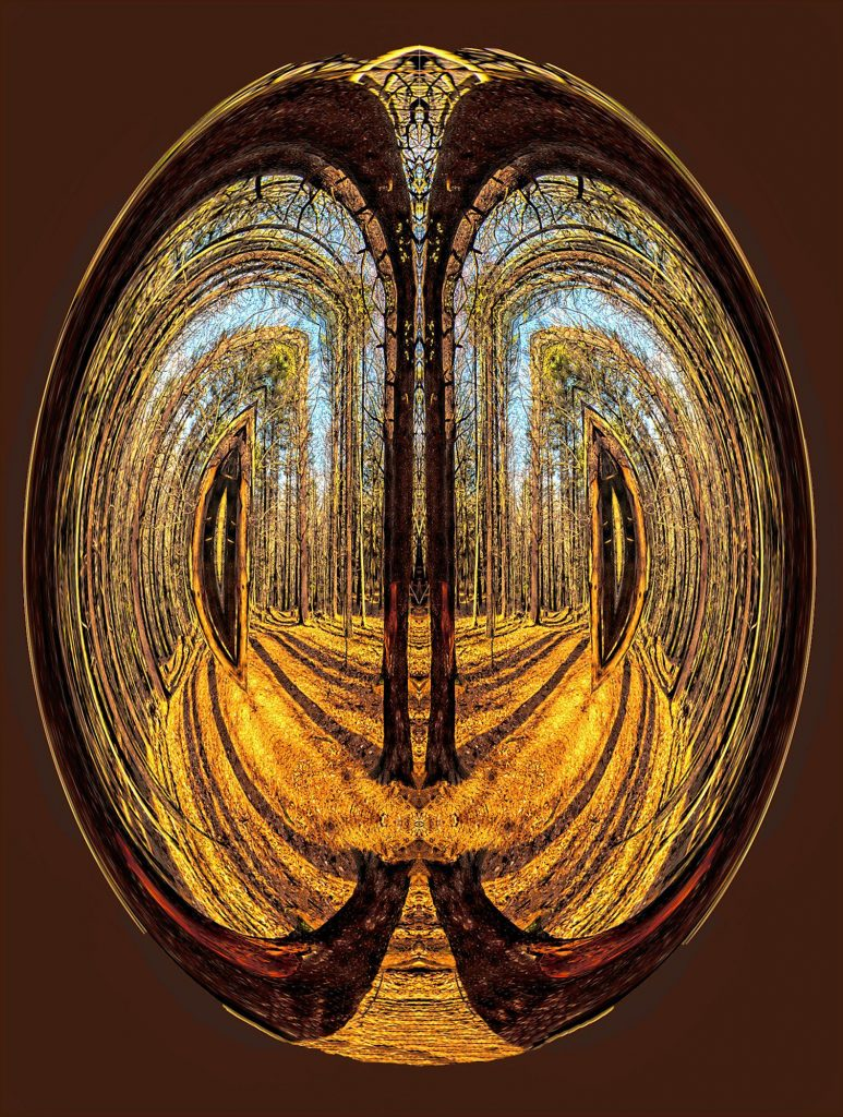 """Cathedral in The Woods"" by digital artist William Townsend William Townsend"
